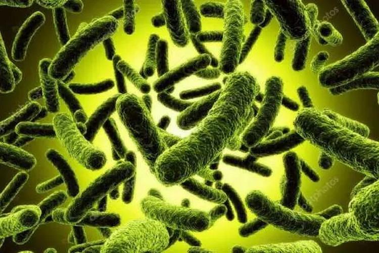 Микроб